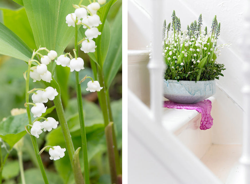 Lily of the Valley: Fragrant Shade Garden Favourite - Farmer ... House Plant Lily Of The Valley on house plant banana, house plant candy cane, house plant dracaena, house plant sage, house plant caladium, house plant vinca, house plant fern, house plant strawberry, house plant datura, house plant dogwood, house plant asparagus, house plant cyclamen, house plant ivy, house plant azalea, house plant lime, house plant orchid, house plant ylang ylang, house plant eucalyptus, house plant thyme,
