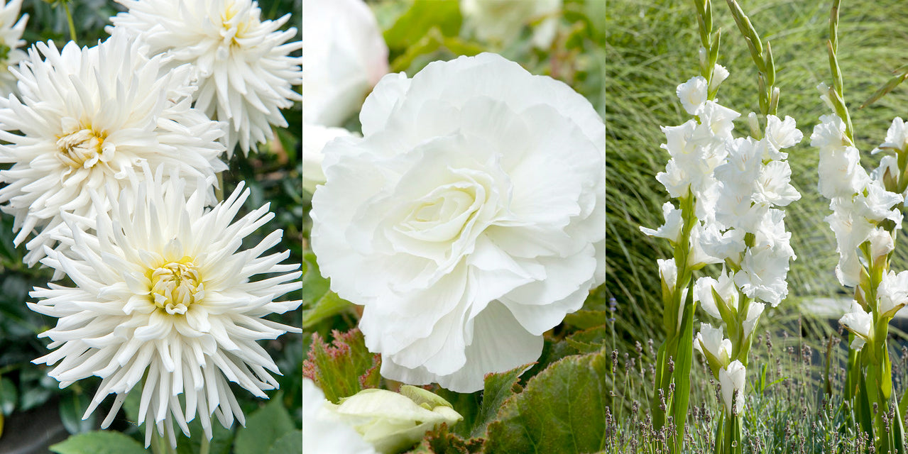 10 Great Plants For A White Summer Garden Farmer Gracys Blog