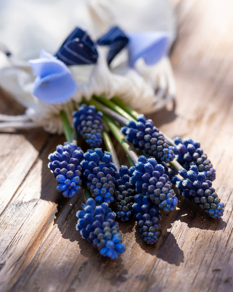 Muscari Night Eyes
