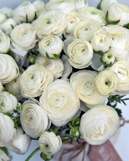 White Ranunculus Bulbs Buy White Buttercups Online At