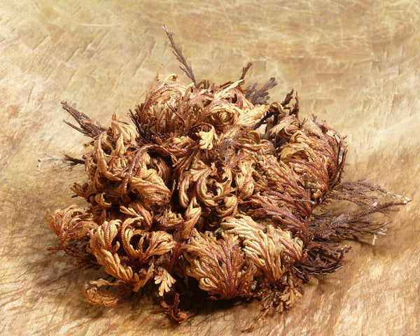 Flower BulbsRose of Jericho Bulbs UK - 2
