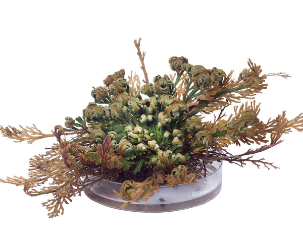 Flower BulbsRose of Jericho Bulbs UK - 3