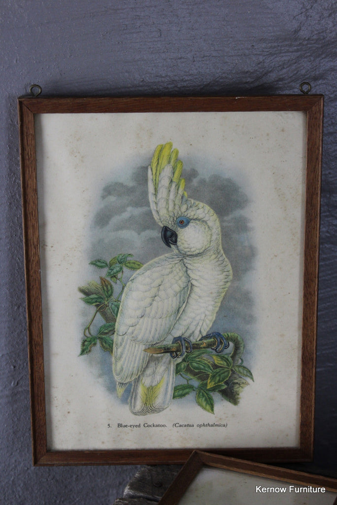 Set 4 Framed Parrot Prints - Kernow Furniture