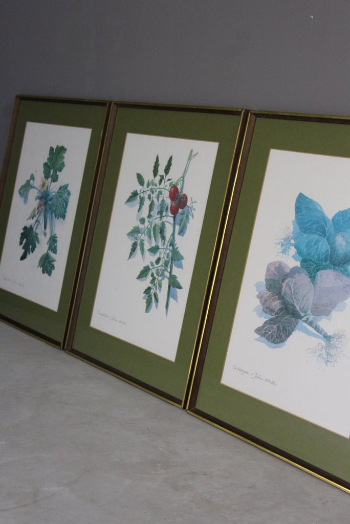 3 Large Framed Botanical Prints - John Miller - Kernow Furniture