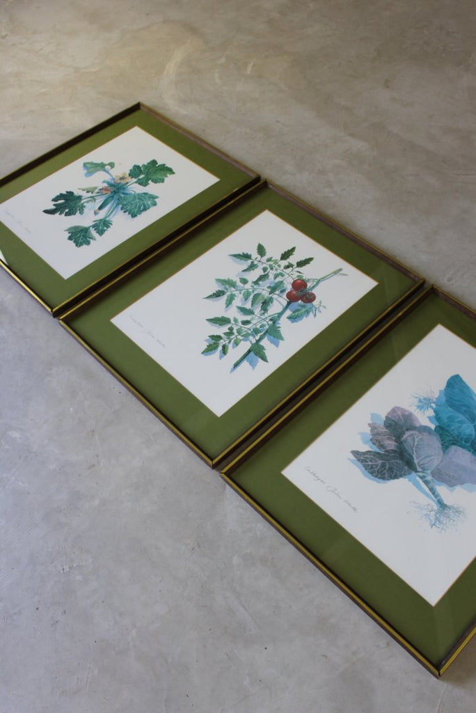3 Large Framed Botanical Prints - John Miller - vintage retro and antique furniture