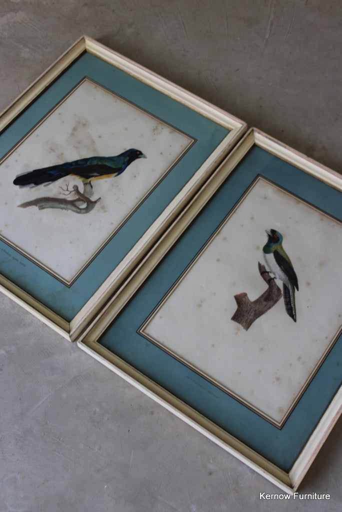 Pair Framed French Bird Engravings - Kernow Furniture