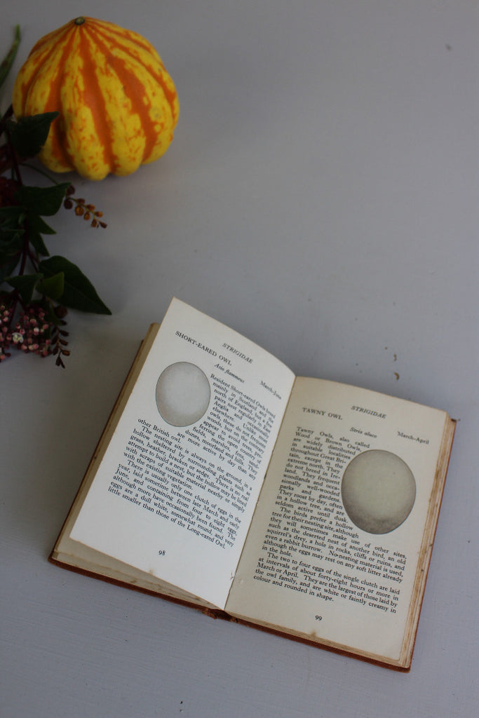 Vintage Observer Bird Eggs Book