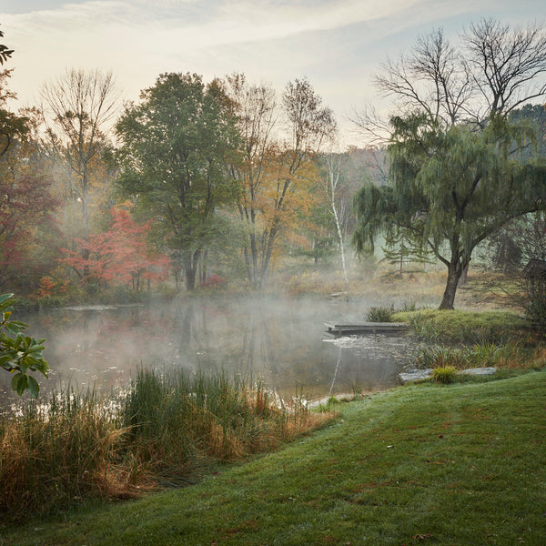 This Photographer Captures the Most Moving Portraits of the World's Gardens /