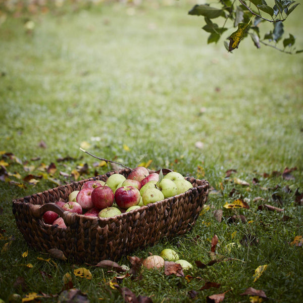 The Importance of Orchards /