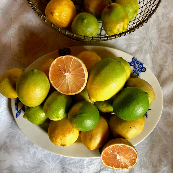 The Year of the Lime: Types & Recipes /