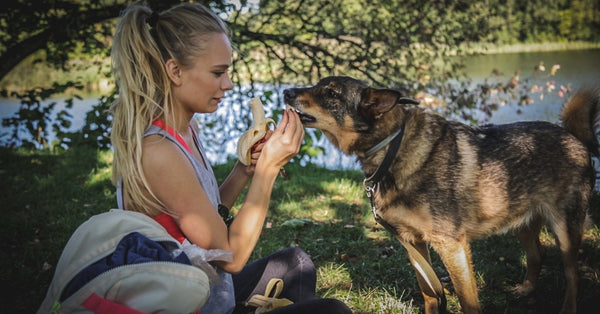 8 ULTIMATE HOMEMADE REMEDIES THAT COULD MAKE YOUR DOG LIVE LONGER together with dog nutrition specialist