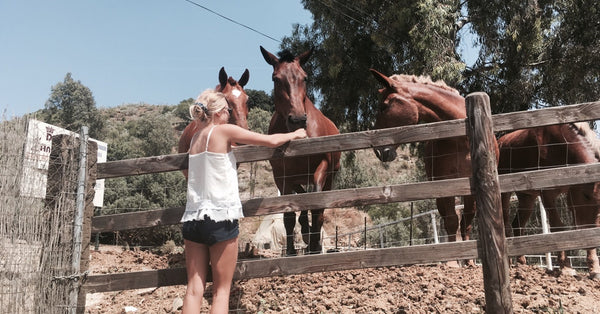 SHOO WEEK IN REVIEW. 1 Blonde, 4 Cats, 2 Horses and 200 TICKS