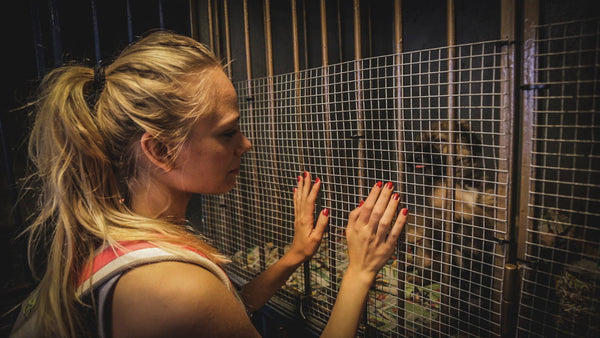 5 Reasons To Visit An Animal Shelter At Least Once In Your Life!