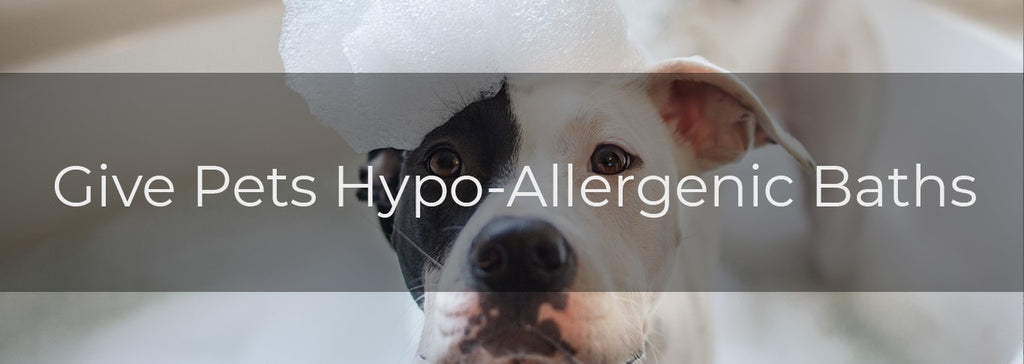 dog in a bubble bath with text Give Pets Hypo-Allergenic Baths
