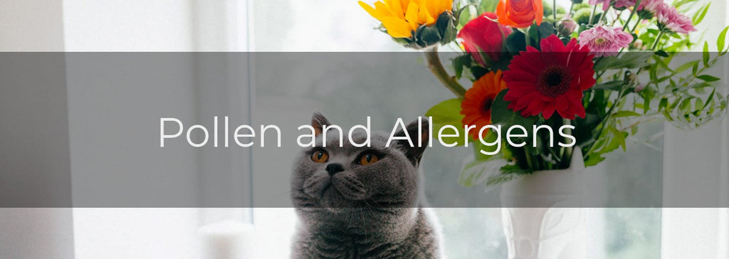 pollen and allergens - cat in front of flowers