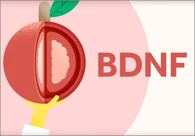 The Importance of BDNF
