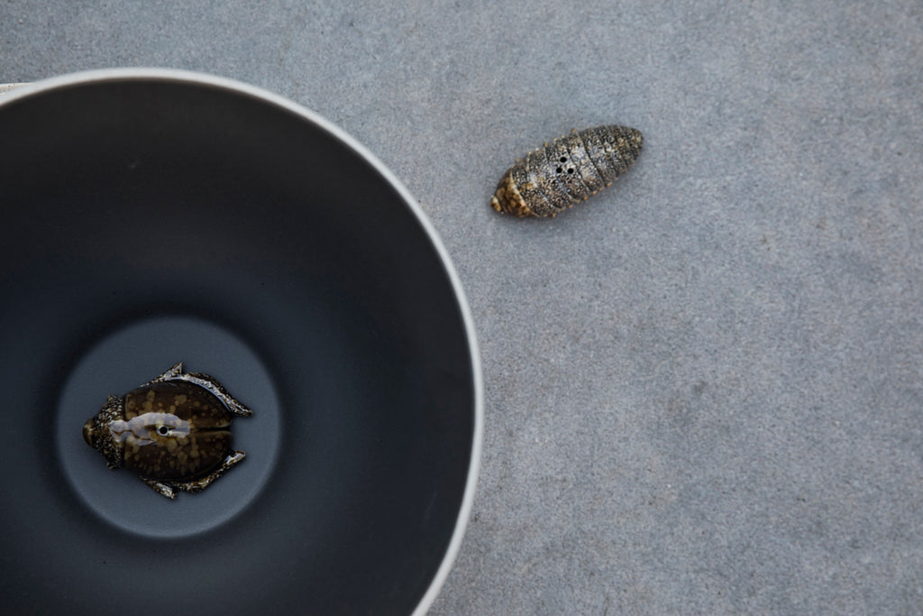 BY ON - SALT AND PEPPER BUG