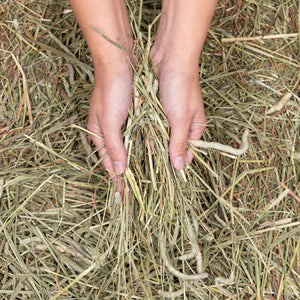 Hay Bundle - 5 Pound Choice 1 - KMS Hayloft