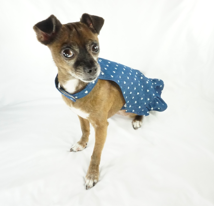 Bella Poochy Lightweight Jean Dress for Dogs - Lavish Pets