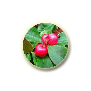 Methyl Salicylate better known as 'Wintergreen Oil', it's addressed the broad range of pain symptoms.