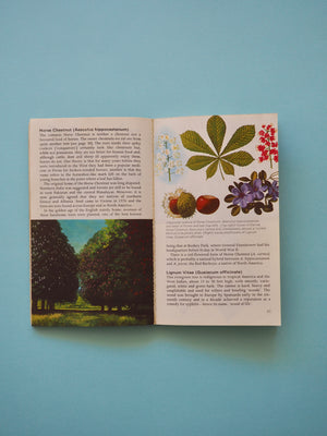 Trees of The World Book