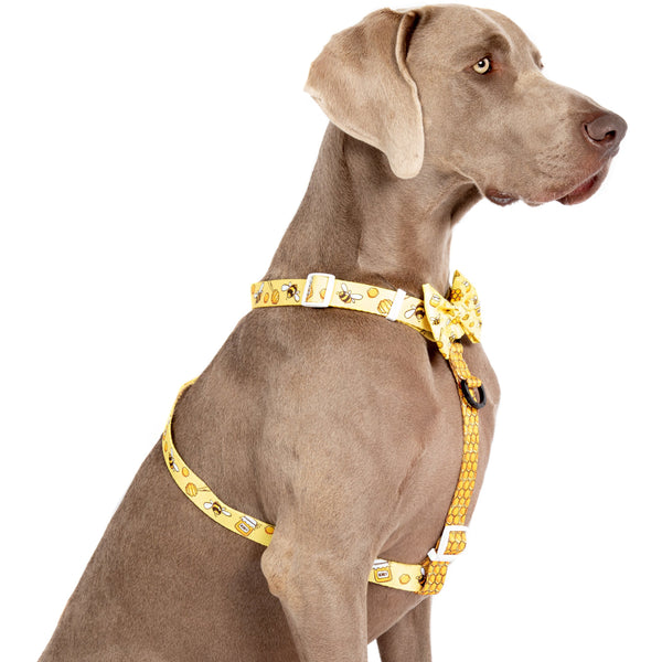 DOG STRAP HARNESS: Bee-Hiving (NEW!)