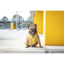 ADJUSTABLE DOG HARNESS: Bee-Hiving (RESTOCKED!)