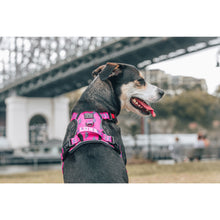 All Rounder Dog Harness Pink Lightning