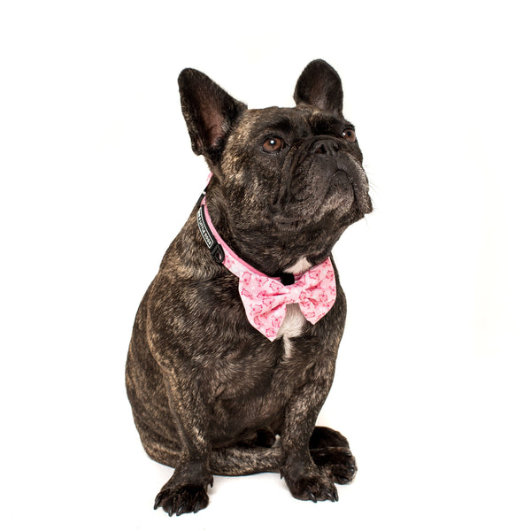 Dog Collar and Bowtie for Big and Small Dogs Gettin' Piggy With It Pigs