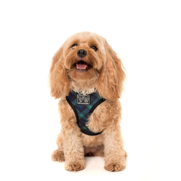 Hoody Dog Harness Green with Envy