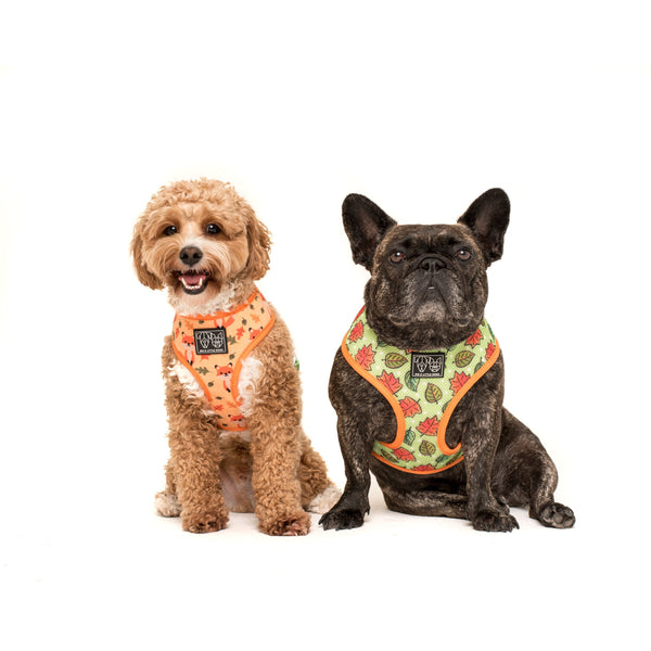 Reversible Dog Harness Feeling Foxy Foxes Leaves