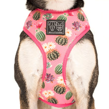 Reversible Dog Harness Plant One On Me Cactus Succulents