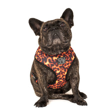 Reversible Dog Harness Truck Yeah! Monster Trucks Flames