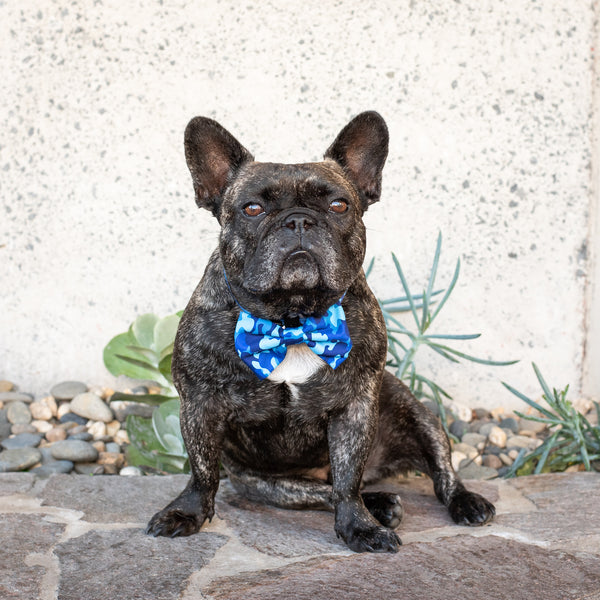 Dog Collar and Bowtie for Big and Small Dogs Blue Camo