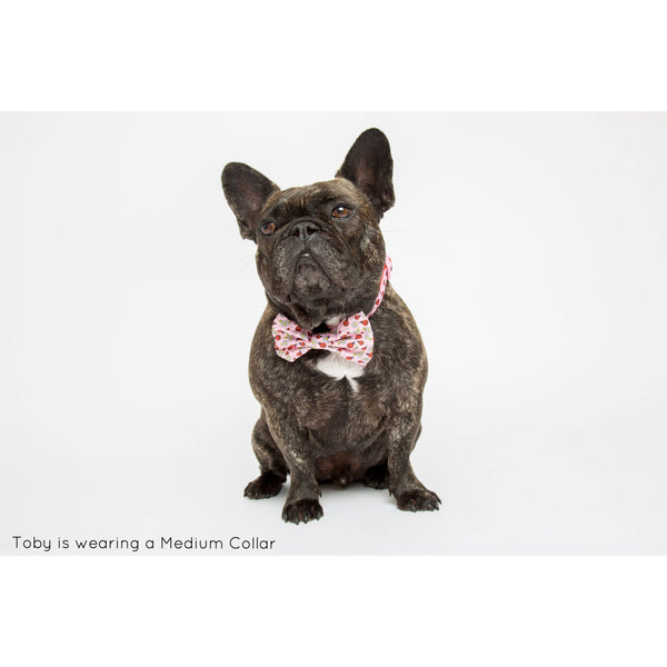 Lady Beetle Daisy Neoprene Dog Collar with Bow Tie