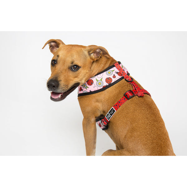 Bug Me Anytime Ladybug Daisy Reversible Dog Harness