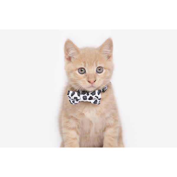 Cat Collar and Bow Tie Off Wild Cat Leopard Print