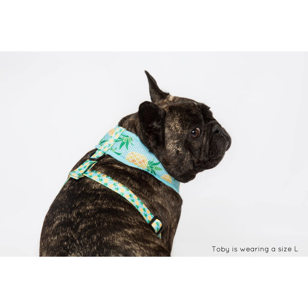 Classic Dog Mesh Harness Pineapples Pine For You