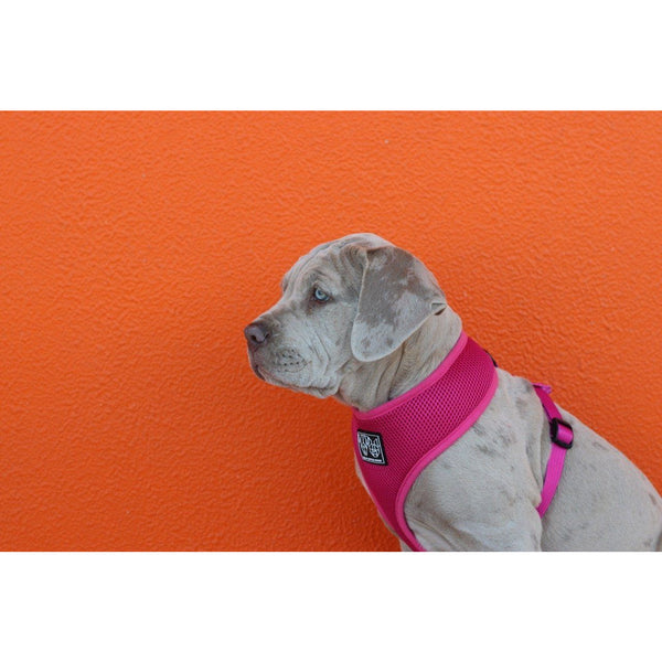Classic Dog Harness Pink