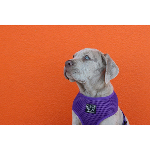 Classic Dog Harness Purple