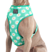 THE CLASSIC PRINT HARNESS: Fresh as a Daisy