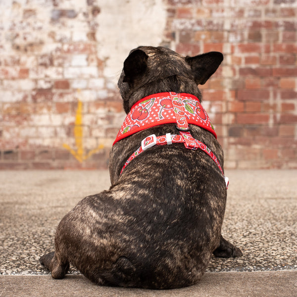 Classic Mesh Dog Harness Cherrylicious Cherries