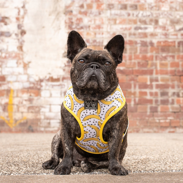 Classic Mesh Dog Harness Going Bananas