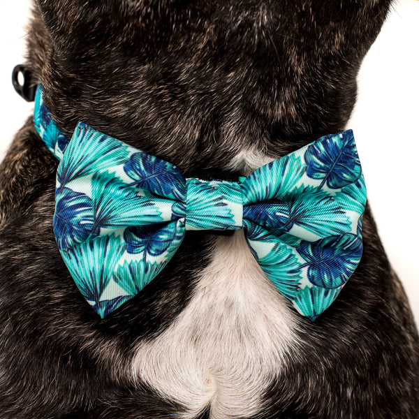 Dog Collar and Bow Tie Miami Summer Palm Leaves