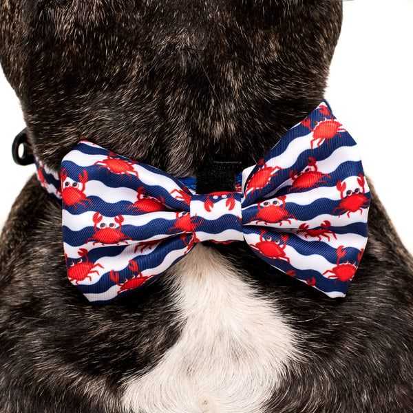 DOG COLLAR & BOW TIE: Under The Sea