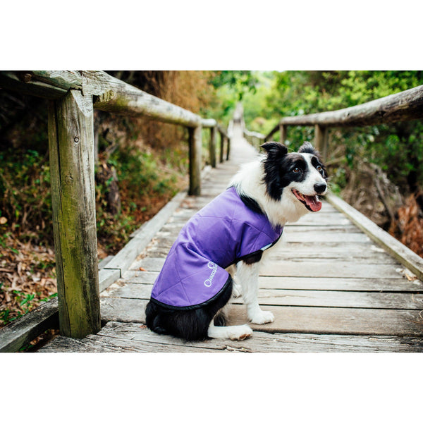 Silver Eagle Cooling Coats Purple