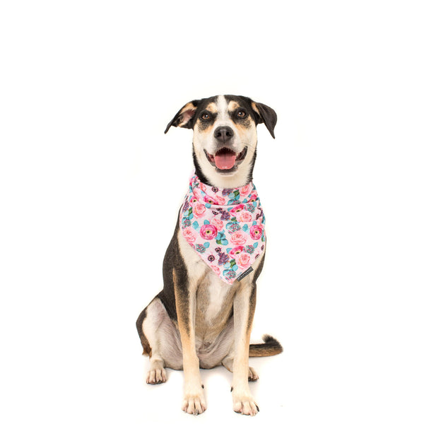 Dog Cooling Neckerchief Bandana I'm a Succa For You Succulents and Flowers
