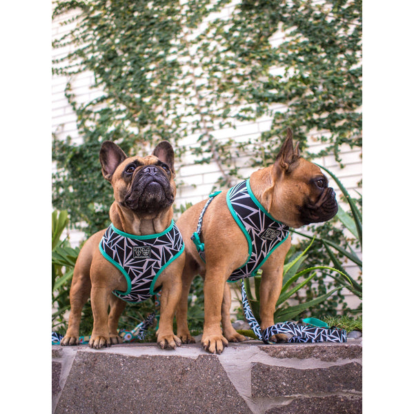 Cracked Up Reversible Dog Harness