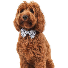 DOG COLLAR & BOW TIE: Gettin' Spotty With It (NEW!)
