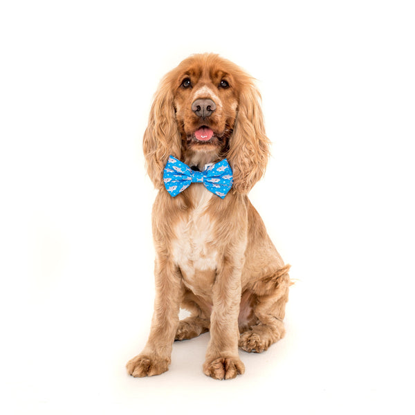 Shark Attack Dog Comfort Collar and detatchable Bow Tie
